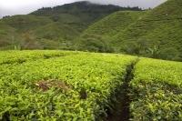 Borneo 2013 - raj krčiažnikov, časť 2