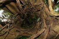 Borneo 2010 - raj krčiažnikov, časť 3